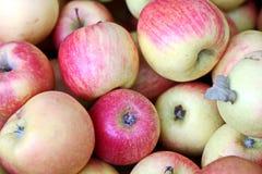 Höstskörd av grönsaker och fruktnärbilden royaltyfria bilder