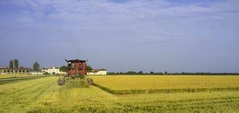 Höstskörd av mogna ris moder två för färgdotterbild arkivfoto