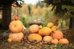 Höstskörd av pumpor halloween Arkivbild