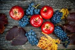 Höstskörd på vingården och lantgården med mogna druvor och röda nya och organiska frukter för äpplen, Royaltyfri Foto