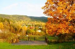 Höstskog över grässlätt i Telemark, Norge Arkivbilder