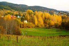 Höstskog över grässlätt i Telemark, Norge Arkivfoton