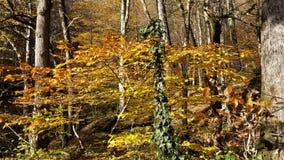 Höstskog, gulingsidor på träden Royaltyfri Fotografi