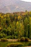 Höstskog i bergen arkivfoton