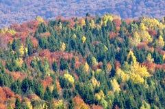 Höstskog i bergen Royaltyfri Fotografi