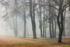 Höstskog i dimma Royaltyfri Bild