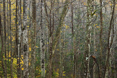 Höstskog i ett regnigt väder Arkivfoto