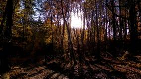 Höstskog i solig dag fotografering för bildbyråer