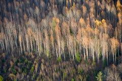 Höstskog, iklädd guld och karmosinrött i hemlandet av Pushkin i Mikhailovsky royaltyfri bild