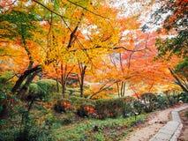 Höstskog Japan Arkivbild