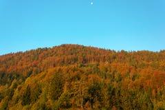 Höstskog med en inställningsmåne Royaltyfri Bild