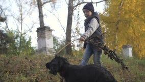 Höstskog med en pojke och hans hund svart spaniel stock video