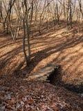 Höstskog med stupade sidor och träbron Royaltyfri Fotografi
