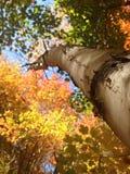 Höstskog med trädet Royaltyfri Fotografi