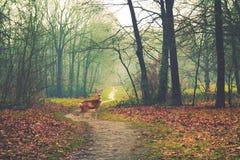 Höstskog och en hjort Fotografering för Bildbyråer