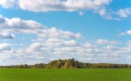 Höstskog och grönt fält Arkivfoton