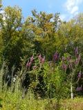 Höstskog och lösa blommor Royaltyfri Bild
