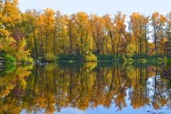 Höstskog och sjö Arkivbild
