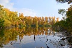 Höstskog och sjö Royaltyfri Bild