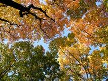 Höstskog och sky arkivbild