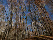 Höstskog på bakgrunden av himmel Arkivbild