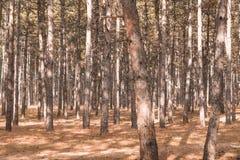 Höstskog på en solig dag Arkivbild