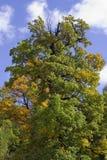 Höstskog på en solig dag Fotografering för Bildbyråer