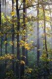 Höstskog på solig morgon Arkivbild