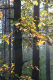Höstskog på solig morgon Royaltyfria Bilder