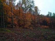 Höstskog skönheten av naturen i nedgången royaltyfria bilder