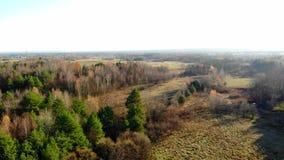 Höstskog som ses från över lager videofilmer