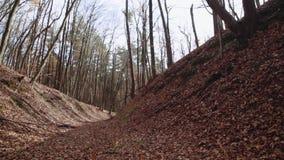 Höstskog, stupade sidor och träd, sol som skiner till och med de kala träden Favorit- säsong Avkopplad atmosfär lager videofilmer