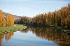 Höstskog vid floden Arkivfoto