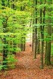 Höstskogbana Royaltyfria Foton