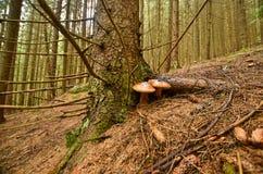 Höstskogen är i berg Arkivbild