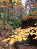 Höstskogen, Adrspach vaggar Royaltyfria Bilder
