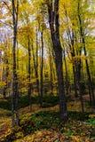 Höstskogen, i föreställt, vaggar, Munising, MI, USA Royaltyfri Bild