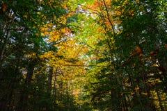 Höstskogen, i föreställt, vaggar, Munising, MI, USA Royaltyfri Foto