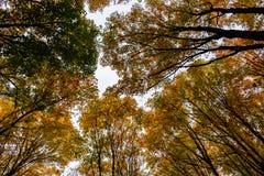 Höstskogen, i föreställt, vaggar, Munising, USA Sikt av treetops Royaltyfri Bild