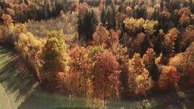 Höstskogen i solilsken blick och linsen blossar lager videofilmer