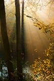 höstskogen rays sunen Arkivfoton