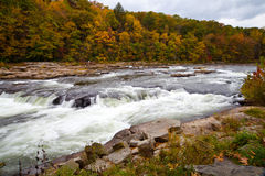 Höstskogen vaggar floden i träna Royaltyfri Fotografi