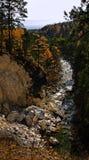 höstskogflod Arkivfoton