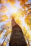 Höstskoglandskap med den låga solen som exponerar små träd Arkivfoto
