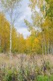 Höstskoglandskap med guld- sidor och den härliga naturen Royaltyfri Bild