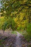 Höstskoglandskap med guld- sidor och den härliga naturen Arkivbild