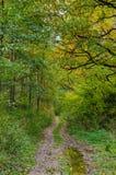 Höstskoglandskap med guld- sidor och den härliga naturen Royaltyfria Foton