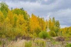 Höstskoglandskap med guld- sidor och den härliga naturen Fotografering för Bildbyråer