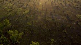 Höstskoglandskap med strålar av varmt ljus Mistic skog royaltyfri foto
