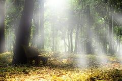 Höstskogliggande. Fotografering för Bildbyråer
